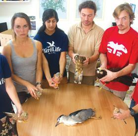 The 'incriminating' photograph: six members of Birdlife Malta holding dead protected birds.