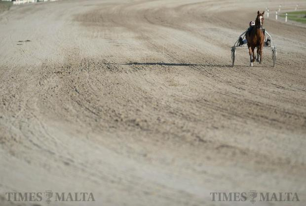 A horse and its rider warm up at the racecourse in Marsa on December 4. Photo: Matthew Mirabelli