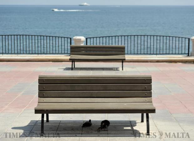 Pigeons shelter from the sun under a bench on the Sliema promenade on August 31. Photo: Chris Sant Fournier