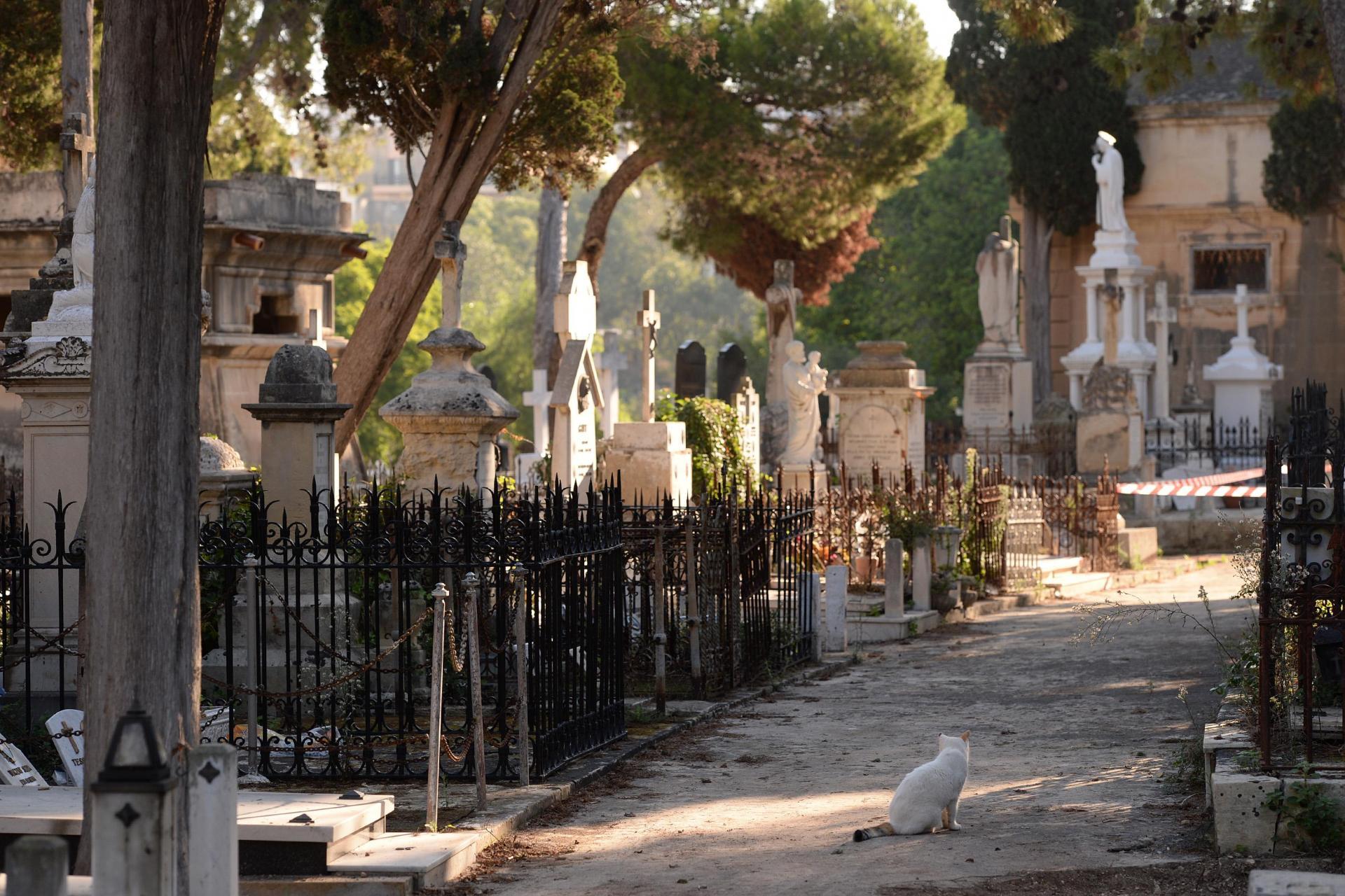 Seven secrets from the Addolorata cemetery