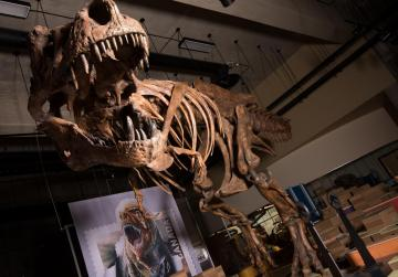 T-rex found in Canada is world's biggest