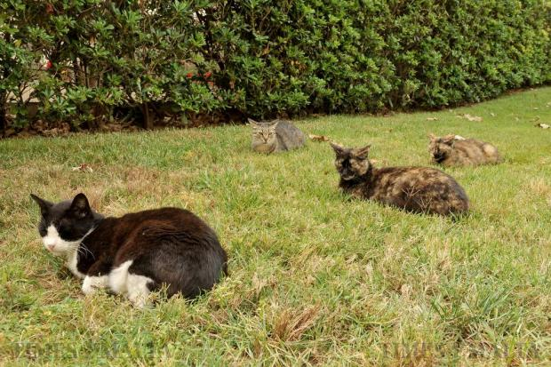 Cats relax on the grass beside a road in St Julian's on May 19. Photo: Chris Sant Fournier