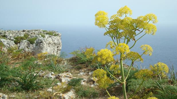 Dingli Cliffs. Photo: Olga Polishchuk