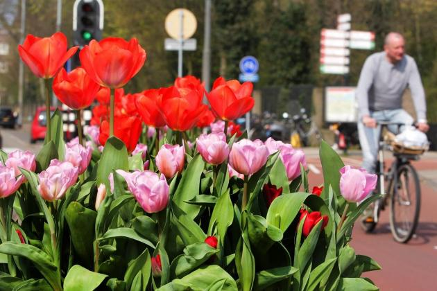 Tulips from Amsterdam? A blooming scam, says new probe