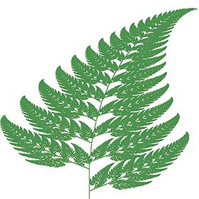 Fern-like fractal. Source: https:// commons. wikimedia.org/w/ index.php?curid=8933735