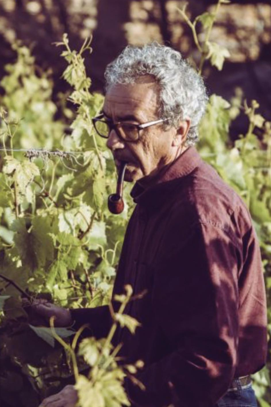 Winemaker Mark Cassar among vines at his estate in Siġġiewi. Photo: Luca Farinotti