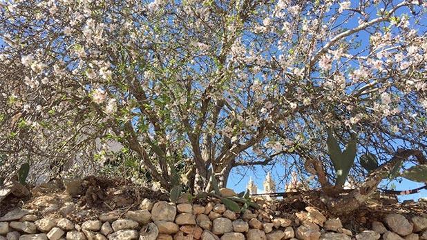 Qala, Gozo. Photo: Josephine Xuereb