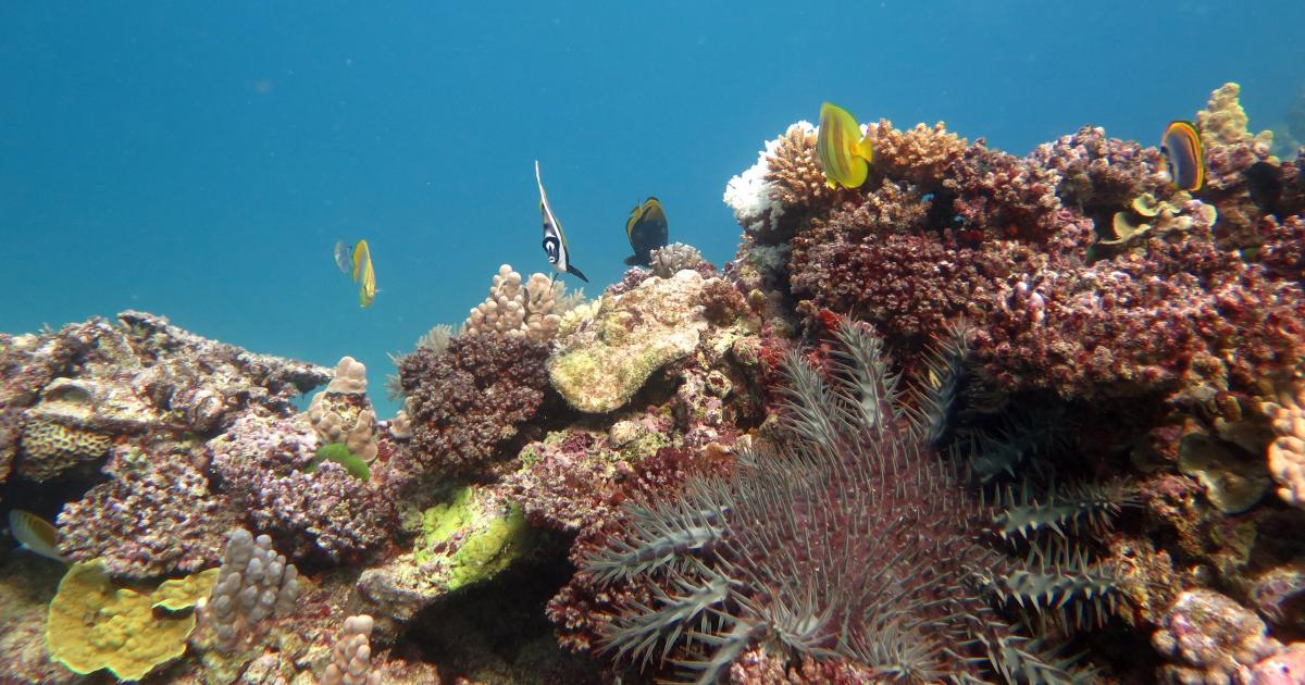Sea urchin eating corals betting 15bn road investment