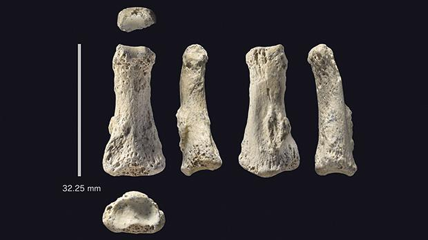 Fossil Homo sapiens finger bone from the Al Wusta site, Saudi Arabia. Photo: Ian Cartwright