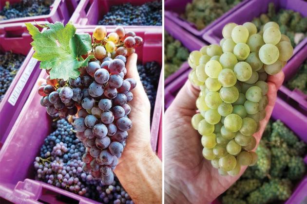 The Delicata winery has a crush on Malta