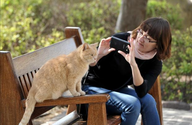 A tourist tries to take a photo of a cat at the Upper Barrakka Garden on March 13. Photo: Chris Sant Fournier