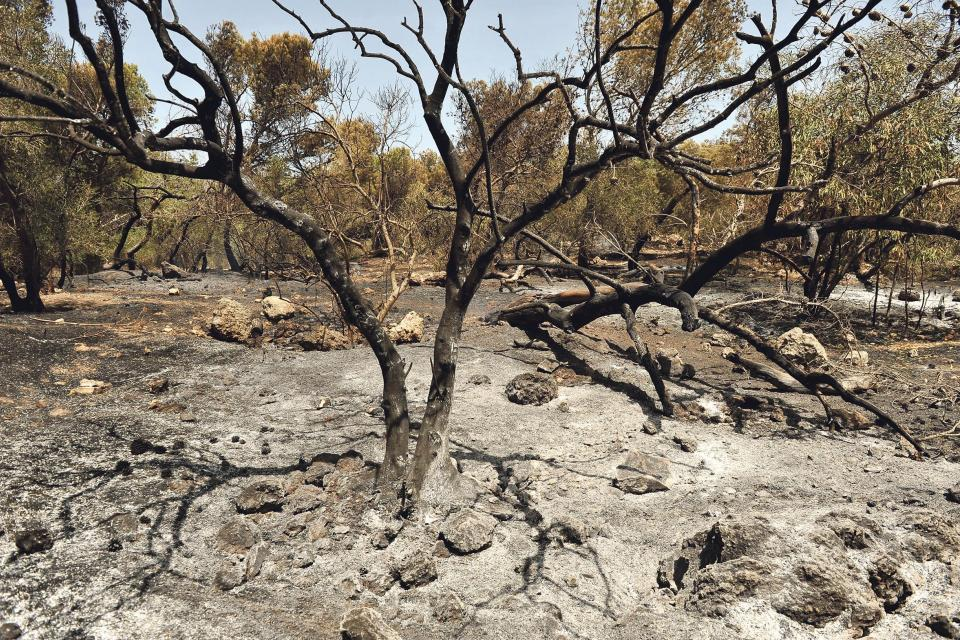 The blaze left a large number of scorched trees. Photo: Chris Sant Fournier