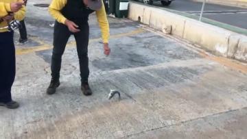 Watch: Sea bream bonanza for fishermen  | Fishing at Mġarr Harbour. Video: Manny Buhagiar/Facebook