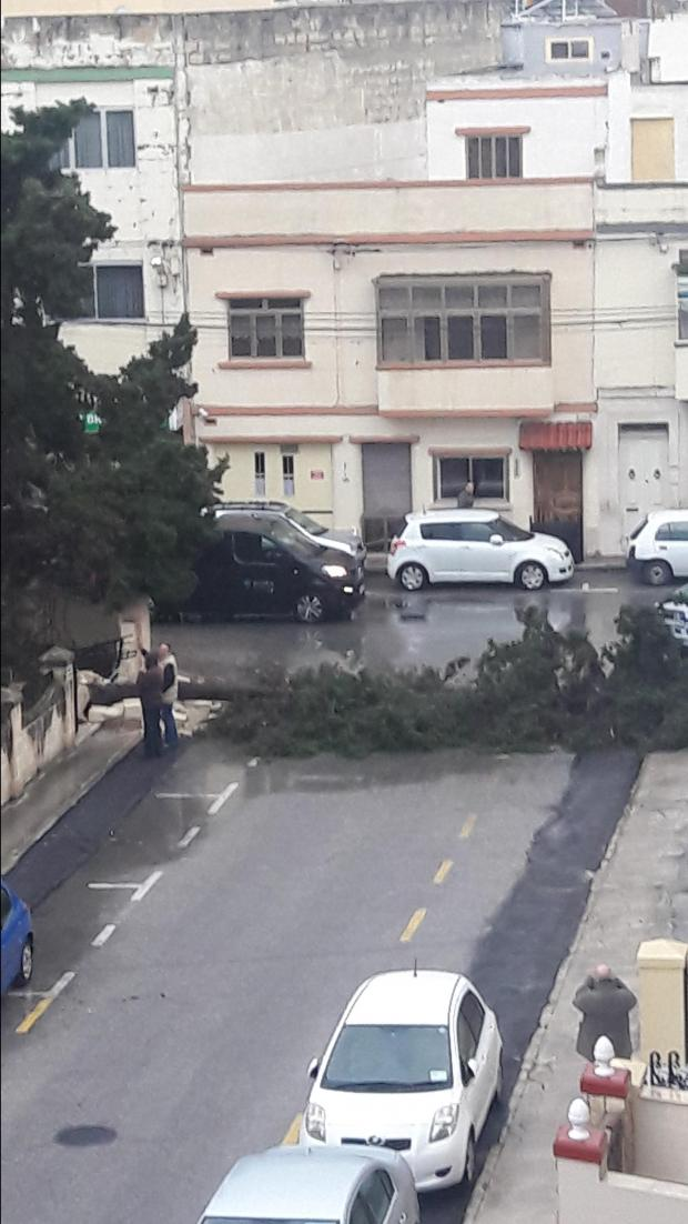 This tree, in Gori Mancini Street, Birkirkara, fell down at around 3.15 am. Photo: Sandra Crossley
