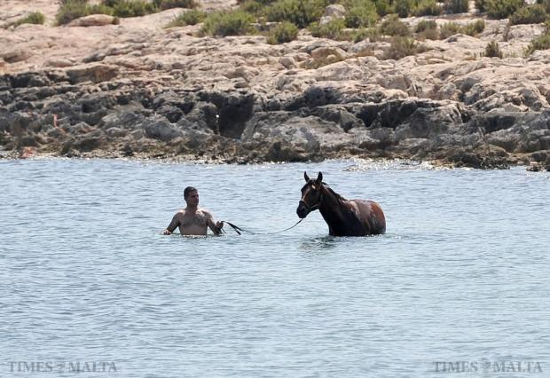 A man takes his horse for a swim at Maghtab on July 8. Photo: Chris Sant Fournier