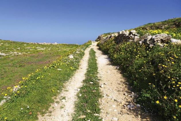 NGOs lose bid for environment assessment of lands released for development