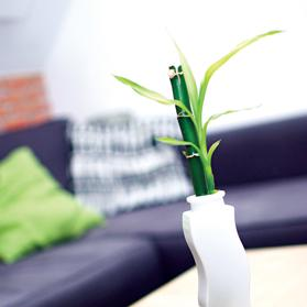 Taking care of a bamboo plant couldn't be easier.