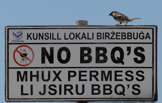 A small bird rests on a sign in Pretty Bay, Birzebugia on June 21. Photo: Matthew Mirabelli
