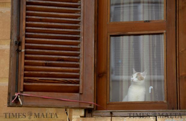A cat glances out of a window in Birgu on April 2. Photo: Matthew Mirabelli