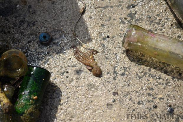 A small octopus comes out from glass bottles taken up from the seabed during a cleanup held in Valletta on June 7. Photo: Mark Zammit Cordina