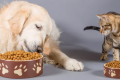 Want to cut down on meat consumption? Feed your pet insects