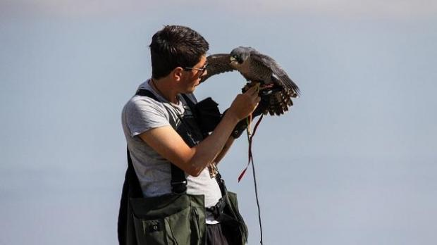 Photo: Kurt Law - Malta Falconers Club