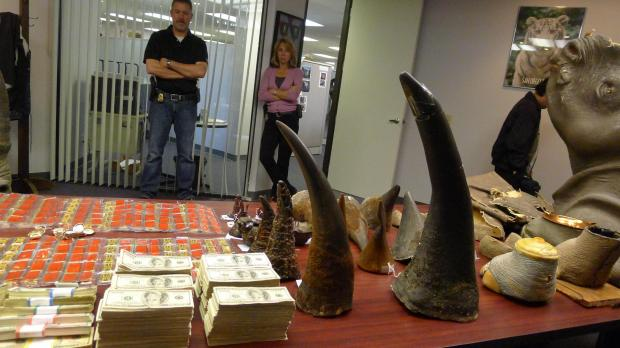 Seven held over rhino horn trafficking for Us fish and wildlife service jobs