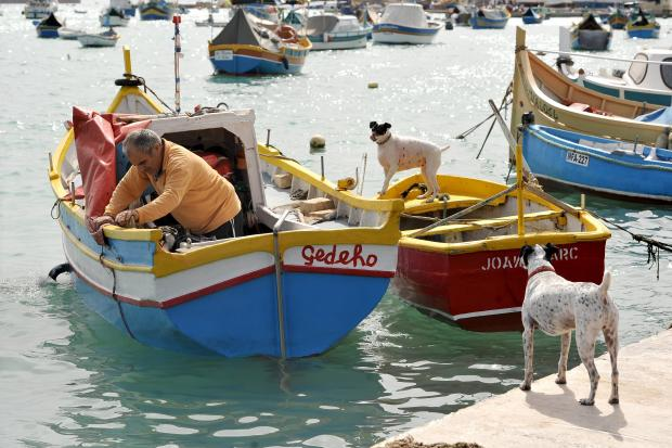 A man and his dogs at Marsaxlokk on March 7. Photo: Chris Sant Fournier