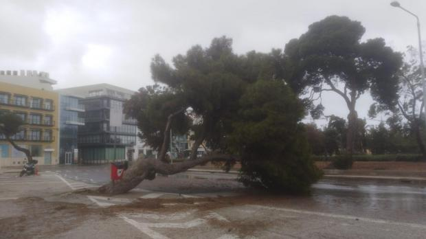 A large tree was blown over in Gżira. Photo: Jonathan Borg