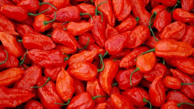A ghost pepper nearly killed the man.
