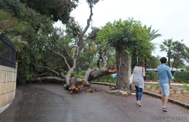 A large tree blocks the path for a couple and their child outside the Phoenicia Hotel in Floriana on October 5. Photo: Matthew Mirabelli