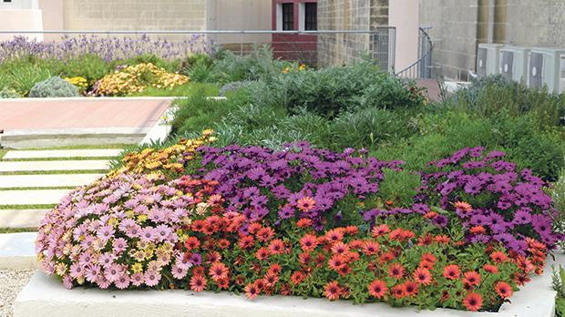 Garden in bloom this March.