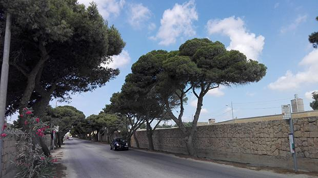 Mqabba: More mature Aleppo pine trees will face the axe if a proposal for a new fuel station along this iconic road leading into Mqabba is approved.