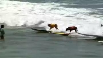 California's doggy surfer dudes