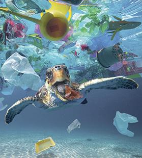 A turtle eating a plastic cup drifting in the middle of a huge garbage patch. Photos: AFP