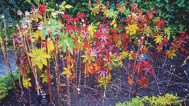 Every tree, plant, leaf and flower inside the garden is highly poisonous.