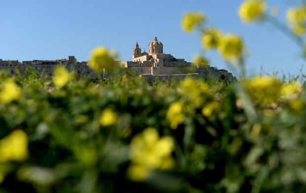 Flowers begin to blossom beneath Mdina on January 16. Photo: Matthew Mirabelli