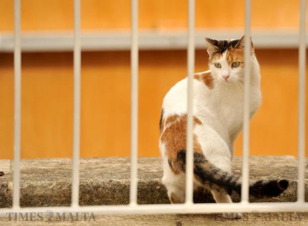 A cat peers through bars at the Valletta open theatre on October 20. Photo: Chris Sant Fournier