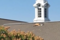 Paraglider crashes through church roof, dies