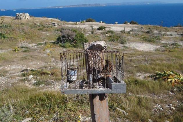 EU threatens legal action over songbird trapping