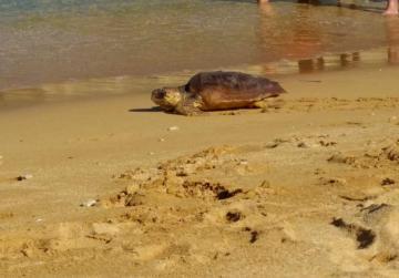 Three turtles set free as NGO cranks up marine litter campaign
