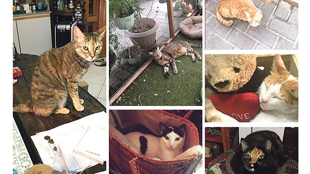 The pet owner's agent in Dubai supervised the purchase of storage accommodation for the 13 cats.