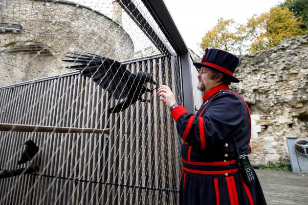 Bad omen for the UK as Tower of London raven missing, feared dead!