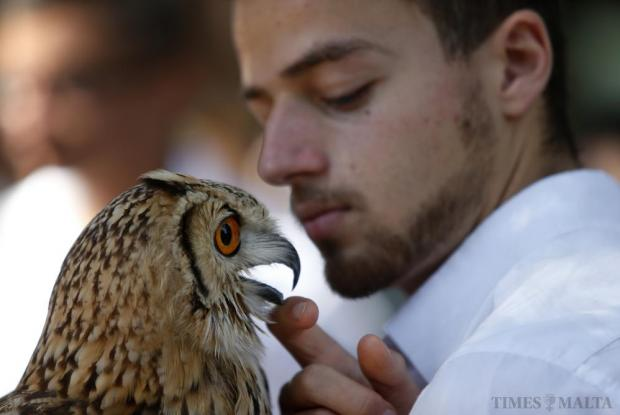 An animal handler strokes an Eagle Owl during the agricultural festival of L-Imnarja in Buskett Gardens on June 29. L-Imnarja, also known as the feast of St. Peter and St. Paul, is the most important date in the Maltese folklore diary. Photo: Darrin Zammit Lupi