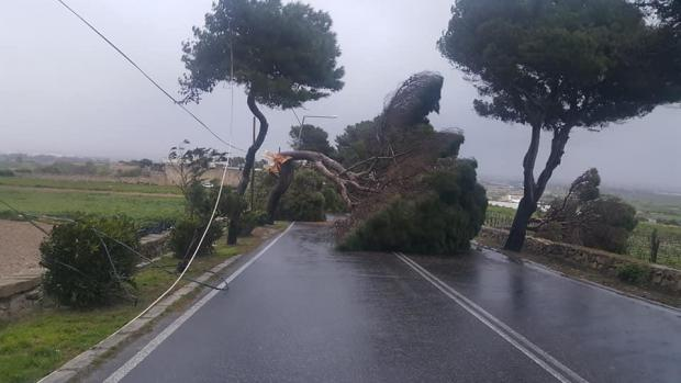A tree blocked the road leading to Rabat.