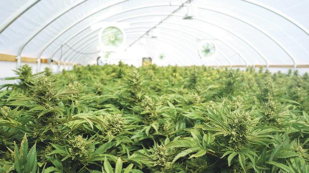 The prospect of selling agricultural land to cannabis cultivators is enticing to struggling farmers