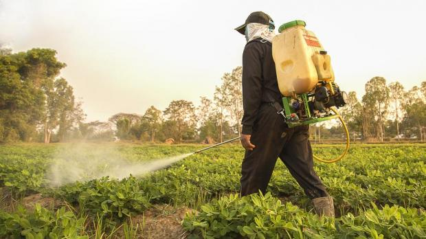 "The WHO has said glyphosate is a ""probable"" carcinogen. Photo: Shutterstock"