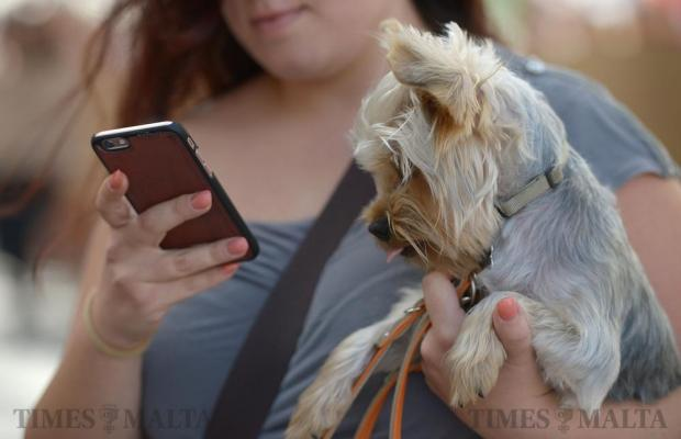 A woman texts on her mobile while her West Highland Terrier looks on in Valletta on October 16. Photo: Matthew Mirabelli