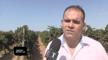 Watch: Wine production down as dry spell hits indigenous grape vines