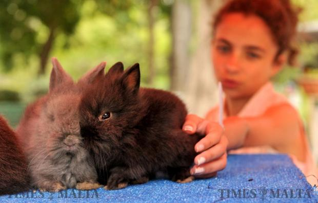 A girl pets a rabbit at a rabbit show at San Anton on May 14. Photo: Chis Sant Fournier